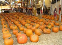 pumpkin patch north hollywood and toluca lake