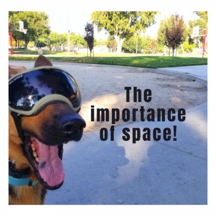 Your Dog needs space