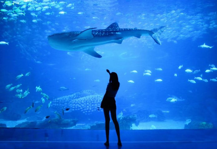 A visit to the Texas State Aquarium is both educational and awe-inspiring.