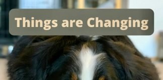 Pets: Things are changing