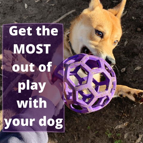 Get the Most Out of Play with Your Dog.