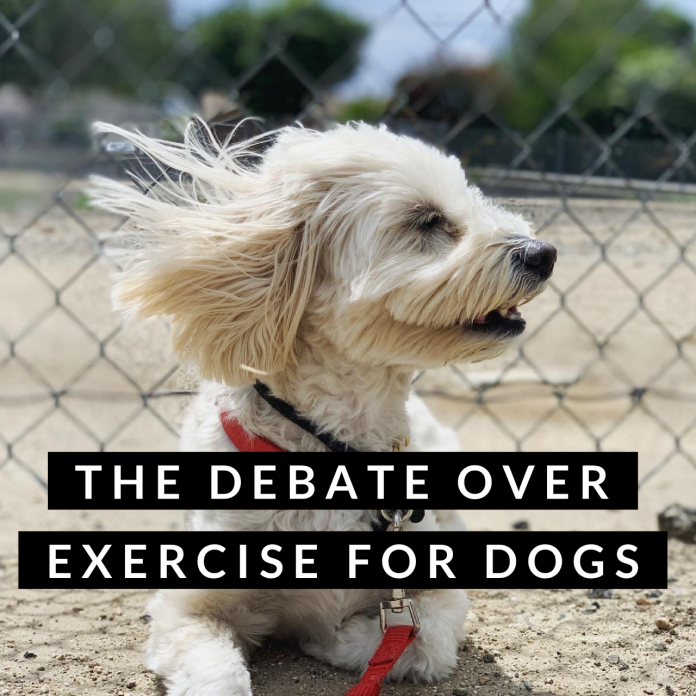 The Debate Over Exercise for Dogs!
