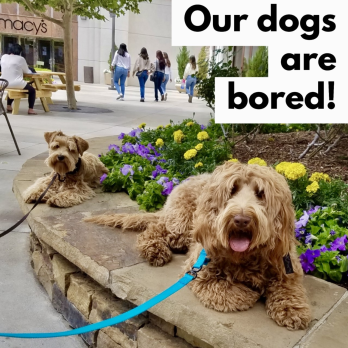 Our Dogs Are Bored